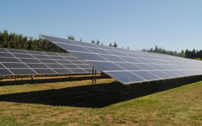 NW Hazelnut Company cuts ribbon on first all-solar processing plant in Hubbard